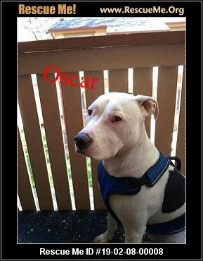 - Oregon Pit Bull Rescue - ADOPTIONS - Rescue Me!