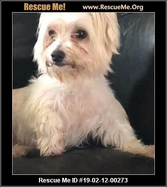Flori Bama Small Breed Rescue - Pensacola, FL - AVAILABLE PETS