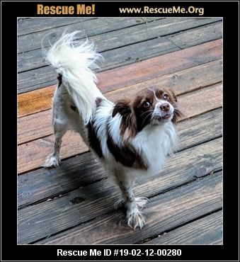 Flori Bama Small Breed Rescue - Pensacola, FL - AVAILABLE PETS