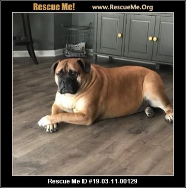 Welcome to Mastiff to Mutts Rescue
