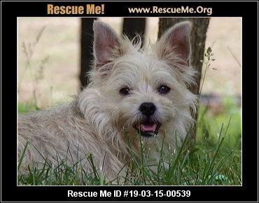 Georgia Westie Rescue - ADOPTIONS - Rescue Me!