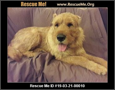 Arizona Soft Coated Wheaten Terrier Rescue - ADOPTIONS - Rescue Me!