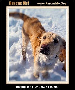 Montana Dog Rescue Adoptions Rescue Me