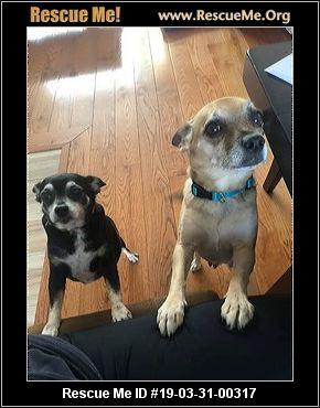 Massachusetts Dog Rescue Adoptions Rescue Me