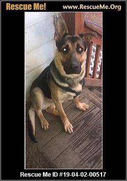 Michigan German Shepherd Rescue Adoptions Rescue Me