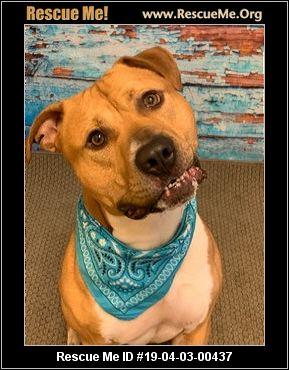 Michigan Pit Bull Rescue Adoptions Rescue Me