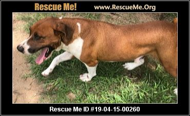 South Africa Boxer Rescue - ADOPTIONS - Rescue Me!