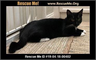 7bd90b8431 California Turkish Van Rescue - ADOPTIONS - Rescue Me!