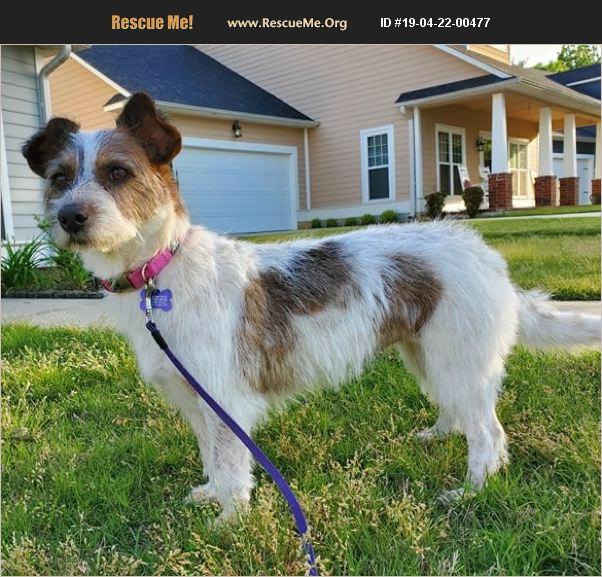 ADOPT 19042200477 ~ Norwich Terrier Rescue ~ Aiken County, SC