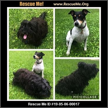 South Africa Scottish Terrier Rescue - ADOPTIONS - Rescue Me!
