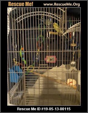 Colorado Pet Bird Rescue - ADOPTIONS - Rescue Me!