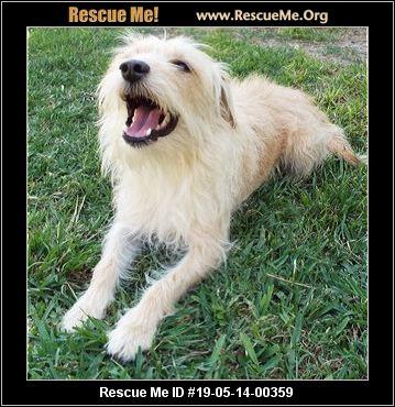 Texas Skye Terrier Rescue - ADOPTIONS - Rescue Me!