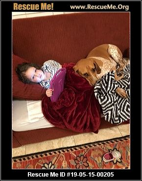 Alabama Bluetick Coonhound Rescue - ADOPTIONS - Rescue Me!