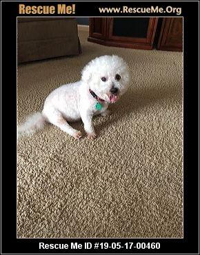 Kentucky Bichon Frise Rescue - ADOPTIONS - Rescue Me!