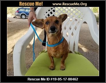 Arizona Yorkie Rescue - ADOPTIONS - Rescue Me!