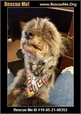 One by One Rescue - Phoenix, AZ - AVAILABLE PETS
