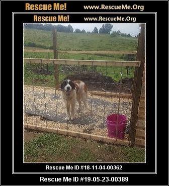 Kentucky Saint Bernard Rescue - ADOPTIONS - Rescue Me!