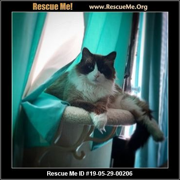 Virginia Ragdoll Rescue - ADOPTIONS - Rescue Me!