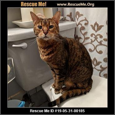 New York Bengal Rescue - ADOPTIONS - Rescue Me!