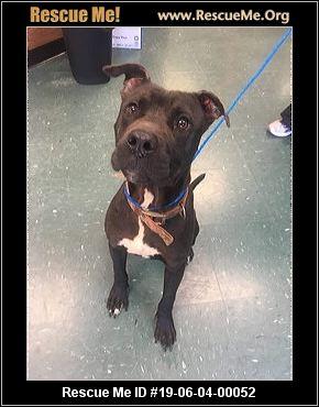Rowan County Animal Control Dogs - Salisbury, NC - AVAILABLE PETS