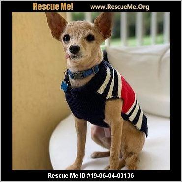 Florida Yorkie Rescue - ADOPTIONS - Rescue Me!