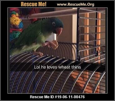 Michigan Pet Bird Rescue - ADOPTIONS - Rescue Me!