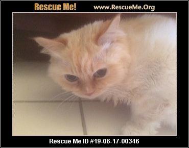 Pennsylvania Ragdoll Rescue - ADOPTIONS - Rescue Me!