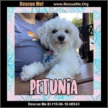 Texas Poodle Rescue - ADOPTIONS - Rescue Me!