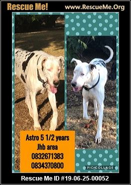 South Africa Great Dane Rescue - ADOPTIONS - Rescue Me!