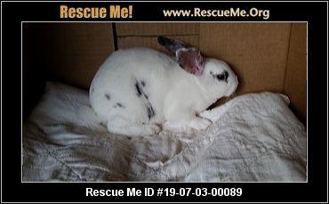 Rabbits For Sale Harrisonburg Va