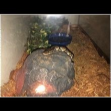 Illinois Reptile/Amphibian Rescue - ADOPTIONS - Rescue Me!
