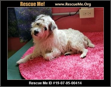 West Virginia Westie Rescue - ADOPTIONS - Rescue Me!