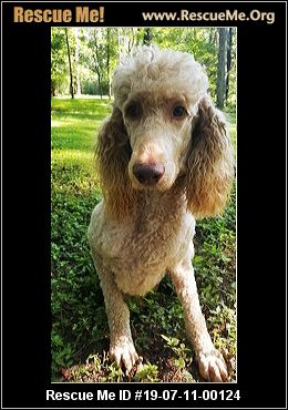 West Virginia Poodle Rescue - ADOPTIONS - Rescue Me!
