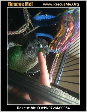 New York Pet Bird Rescue - ADOPTIONS - Rescue Me!