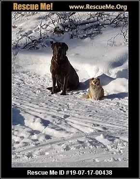 Alaska Mastiff Rescue - ADOPTIONS - Rescue Me!