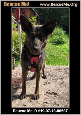 New York German Shepherd Rescue Adoptions Rescue Me