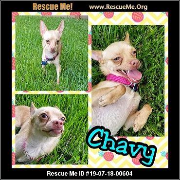 Texas Chihuahua Rescue - ADOPTIONS - Rescue Me!
