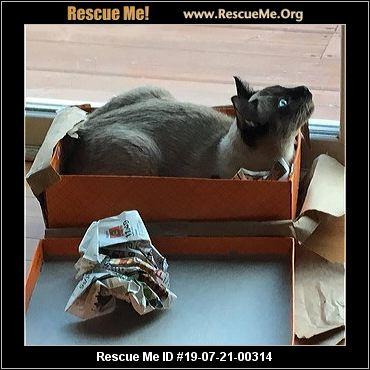 Illinois Siamese Rescue - ADOPTIONS - Rescue Me!