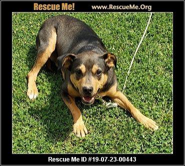 Michigan Beagle Rescue Adoptions Rescue Me