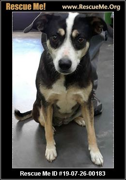 - South Carolina Australian Shepherd Rescue - ADOPTIONS ...