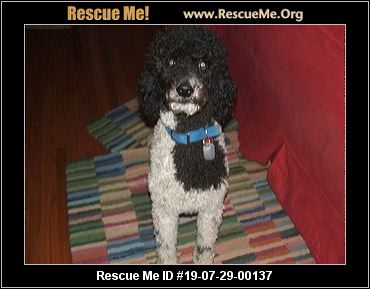 Indiana Poodle Rescue - ADOPTIONS - Rescue Me!