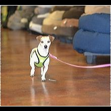 Mutt Rescue ― ADOPTIONS