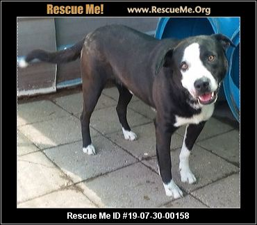 Second Chance Shelter - Boaz, AL - AVAILABLE PETS