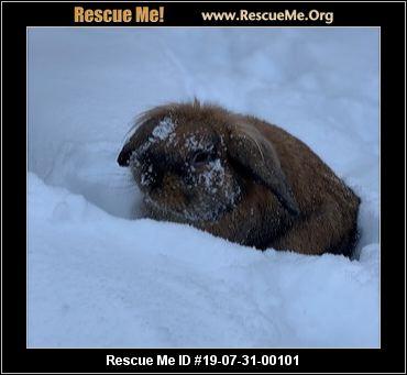 Colorado Rabbit Rescue - ADOPTIONS - Rescue Me!