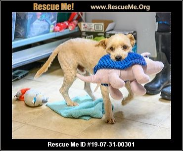 New Jersey Poodle Rescue - ADOPTIONS - Rescue Me!
