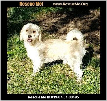 Illinois Poodle Rescue - ADOPTIONS - Rescue Me!