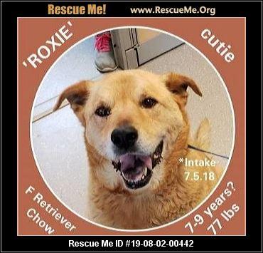 Pennsylvania Chow Chow Rescue - ADOPTIONS - Rescue Me!