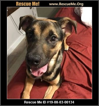 Pibbles & More Animal Rescue, Inc  - Binghamton, NY - AVAILABLE PETS