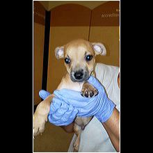 South Carolina Dog Rescue - ADOPTIONS - Rescue Me!