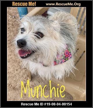 Oklahoma Pomeranian Rescue - ADOPTIONS - Rescue Me!
